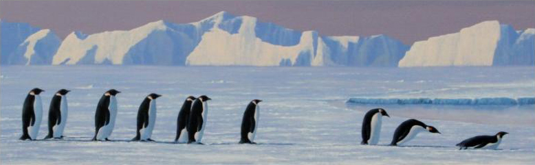 BBC Wildlife Artist of The Year - Frozen Planet Category Winner 2013